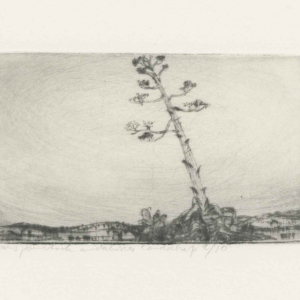 Frans Pannekoek, Agave boom in Andalusisch landschap, 1974, Fondation Custodia - Collectie Frits Lugt, Parijs